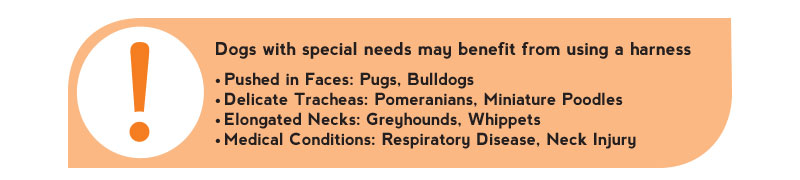 Dogs Special Needs