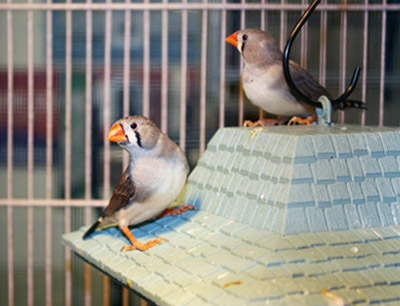 Explore Our Aviary