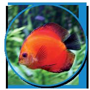 Visit that fish place that pet place 237 centerville for That fish place lancaster pa