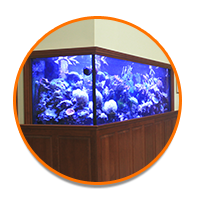Explore Our Store: Glass Aquarium Listing