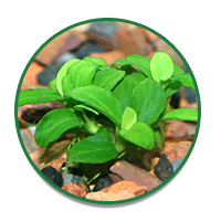 Explore Aquarium Plants