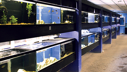 Explore Our Fish Room