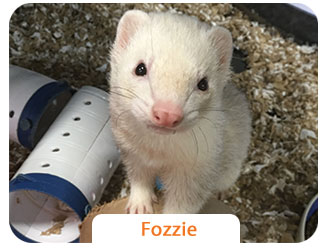 Meet our Small Animal Store Pets- Jax & Fozzie