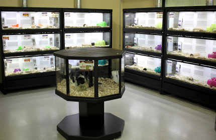 Explore Our Reptile Room