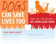 Canine Blood Donation: Dogs Can Save Lives Too (infographic)