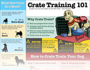 Crate Training 101: Everything you need to know to start crate training