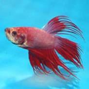 Freshwater Fish - Aquarium Fish For Sale Online | thatpetplace com