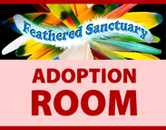 Feathered Sanctuary Exotic Bird Rescue Meet & Greet