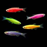 GloFish Starter Packs