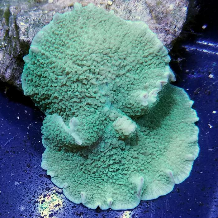 Conjoined Mushroom Rock