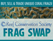 Reef Conservation Society Winter Frag Swap
