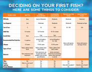 Deciding on your first fish?