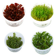 Tissue Culture Aquarium Plants