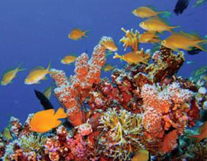 Saltwater Aquarium Basics