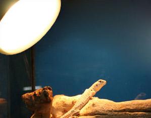 Reptile Uva Uvb Lighting Guide