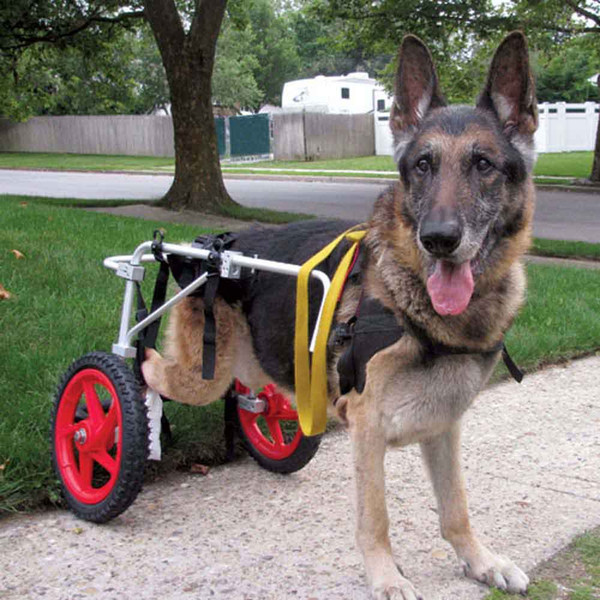 Best Friends Mobility Dog Wheelchair Large