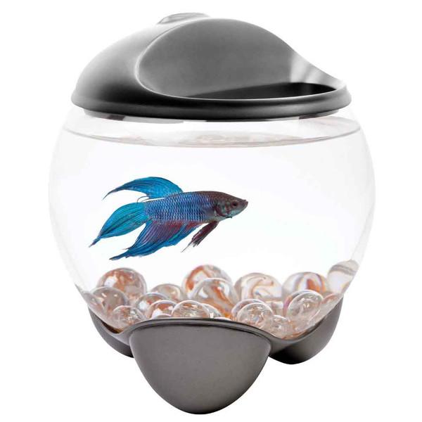 Tetra Betta Bubble Betta Bowl 5 Gal That Fish Place